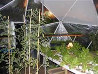 Eco Geodesic Greenhouse Dome