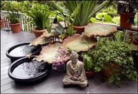 Green Feng Shui Design Service